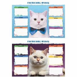 """Расписание уроков А3 """"Коты"""""""